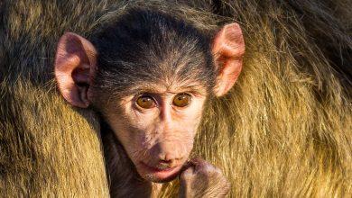 Photo of In Search of Zambia's Stunning Wildlife: A Virtual Safari
