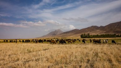 Photo of 12 Days on the Most Storied Highway of Them All: The Silk Road