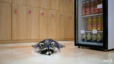 Photo of Customers desert South Korea's animal cafes over coronavirus fears
