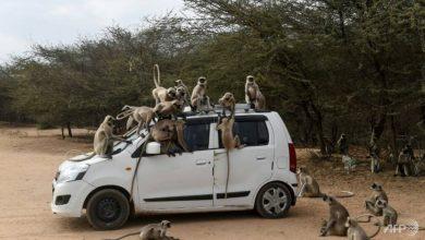 Photo of Monkeys, elephants and dogs reclaim India's streets in virus lockdown