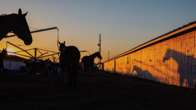 Photo of How Sports-Starved Bettors Made a Nebraska Horse Track Must-See TV