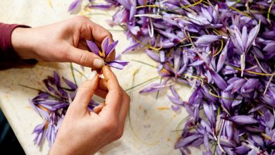Photo of An Intimate Look at Italy's Saffron Harvest