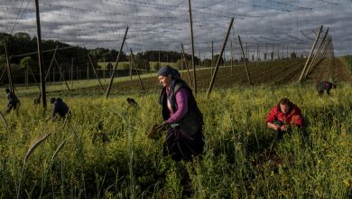 Photo of Farm Workers Airlifted Into Germany Provide Solutions and Pose New Risks