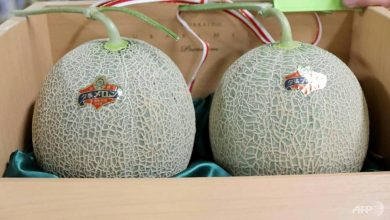 Photo of Prices of Japanese premium melons plunge amid coronavirus outbreak