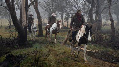 Photo of Majestic Icon or Invasive Pest? A War Over Australia's Wild Horses