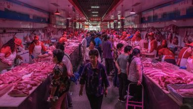 Photo of China Vowed to Keep Wildlife Off the Menu, a Tough Promise to Keep