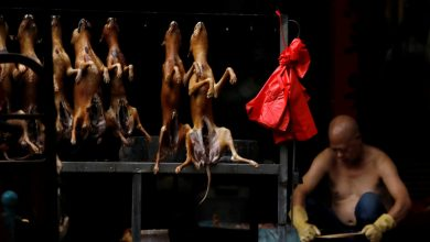 Photo of In Fight to Ban Dog Meat, China's Activists Find an Ally: The Coronavirus