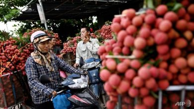 Photo of Vietnam's lychee crop not bearing fruit as prices hit by COVID-19 slump