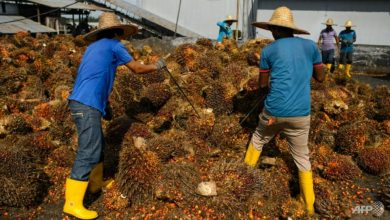 Photo of Malaysia palm plantations urge government to let foreign workers return