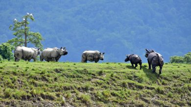Photo of Flooding in India Kills Scores of Animals, Including Endangered Rhinos