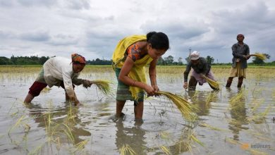 Photo of After vigorous monsoon rains, crop planting gathers pace in India