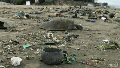 Photo of 160 turtles caught in plastic waste rescued from Bangladesh beach