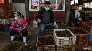 Photo of China aims to phase out sale of live poultry at food markets