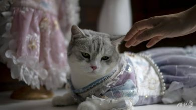 Photo of Pet clothing designer inspired by ancient Chinese beauties