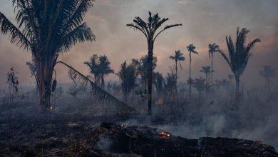 Photo of Under Pressure, Brazil's Bolsonaro Forced to Fight Deforestation