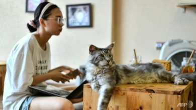 Photo of Vietnam cat cafe offers perfect pick-me-up for rescued felines