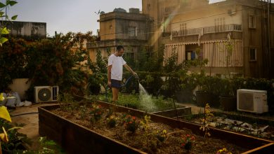 Photo of 'Agricultural Jihad': A Hungry Lebanon Returns to Family Farms to Feed Itself