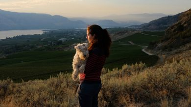 Photo of Canada's Napa Valley Seeks Elusive Audience: Canadian Wine Drinkers