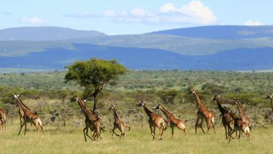 Photo of Do Safari Companies Really Want African Travelers?