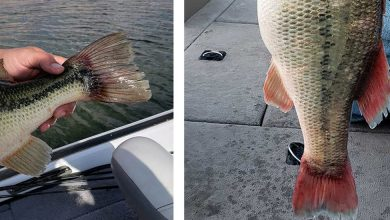 Photo of Cheating in Utah Fishing Contest Results in Two Felony Convictions