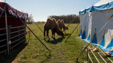 Photo of The coronavirus pandemic stranded this traveling family circus