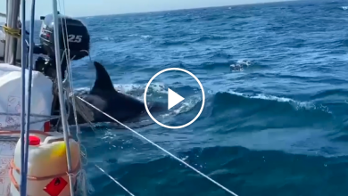 Photo of Video Shows Orcas Damaging a Boat in Spain