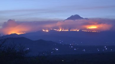 Photo of Fires on Slopes of Kilimanjaro Threaten a Diverse Ecosystem